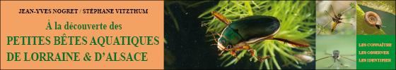 A la découverte des petites bêtes aquatiques